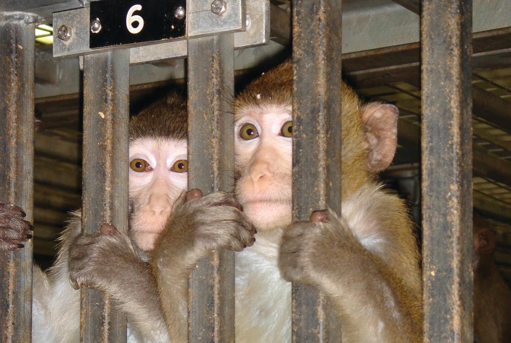 WDLA_HLS primates