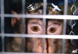 NAVS Institute of Neurology primate2_moderate