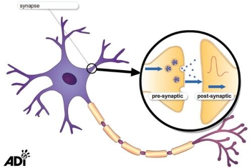 navsweb_prop_neuron03_img copy